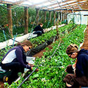 Sustainable Living Academy - Boot Camp - Gardening - Non-Profit