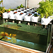 Sustainable Living Academy - Food Production - Aquaponics - Charity - Non-Profit
