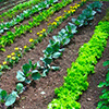 Sustainable Living Academy - Food Production - Open Space - Charity - Non-Profit