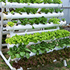 Sustainable Living Academy - Food Production - Hydroponics - Charity - Non-Profit