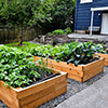 Sustainable Living Academy - Food Production - Raised Bed - Charity - Non-Profit